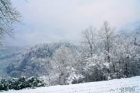 雪中行,风雪山林
