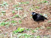 街头公园的野鸟-叫得出名字吗?