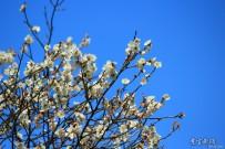 春天从梅花开始