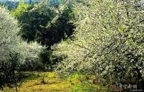 花开花落迎春风