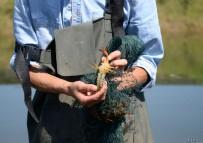 跟随龙虾养殖户—朝小强  感受田园生活
