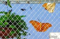 网中的蝴蝶