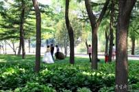 公园偶遇拍婚纱照