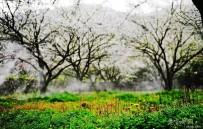 宜都架锅山的春天象花园