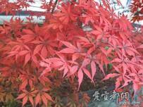 神龙架的秋天