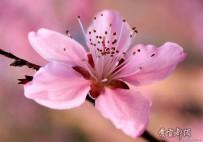 大美之春。