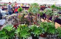 宜都人拍北京54——北京园林、盆景、花卉市场(3)