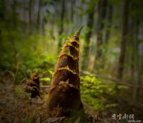 宜都的竹海--松木坪金岗岭  休闲好去处